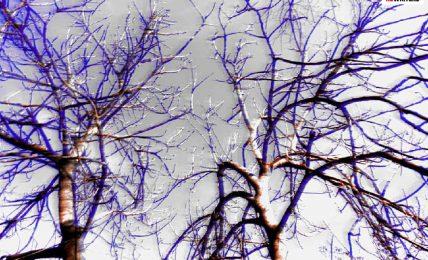 alberoviola
