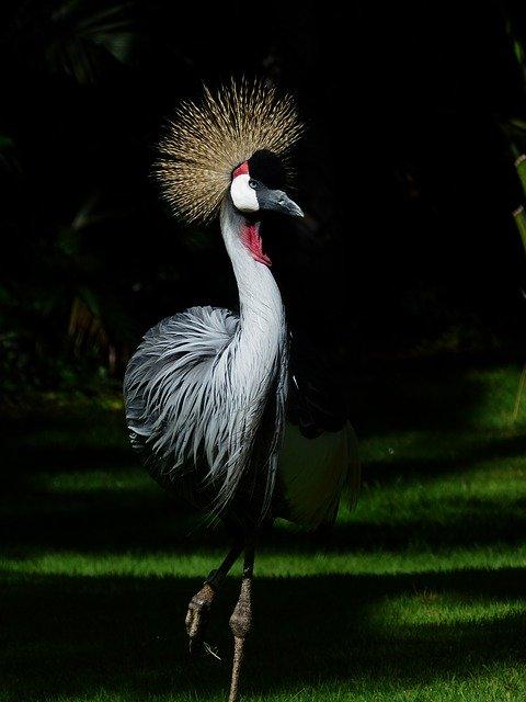 L'Uccello dalle Piume di Cristallo