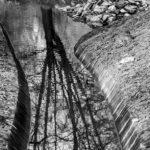 l'albero narciso