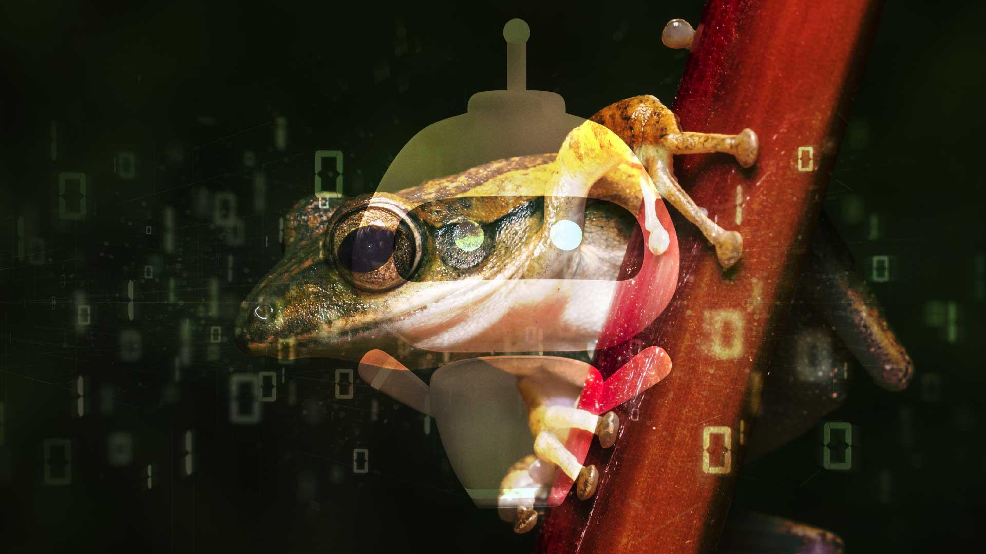 xenobot, futuro