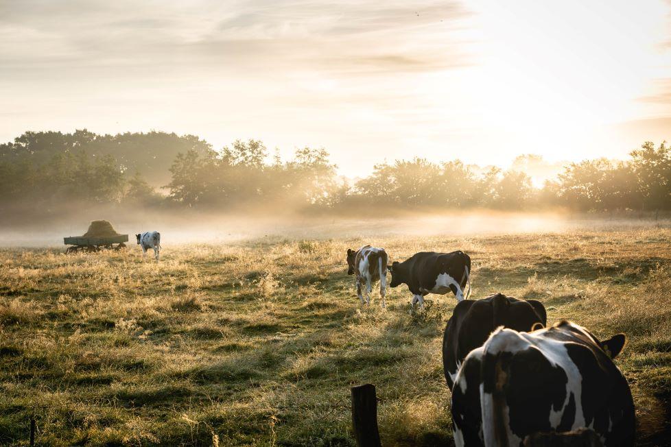 sostenibilità-alimentare