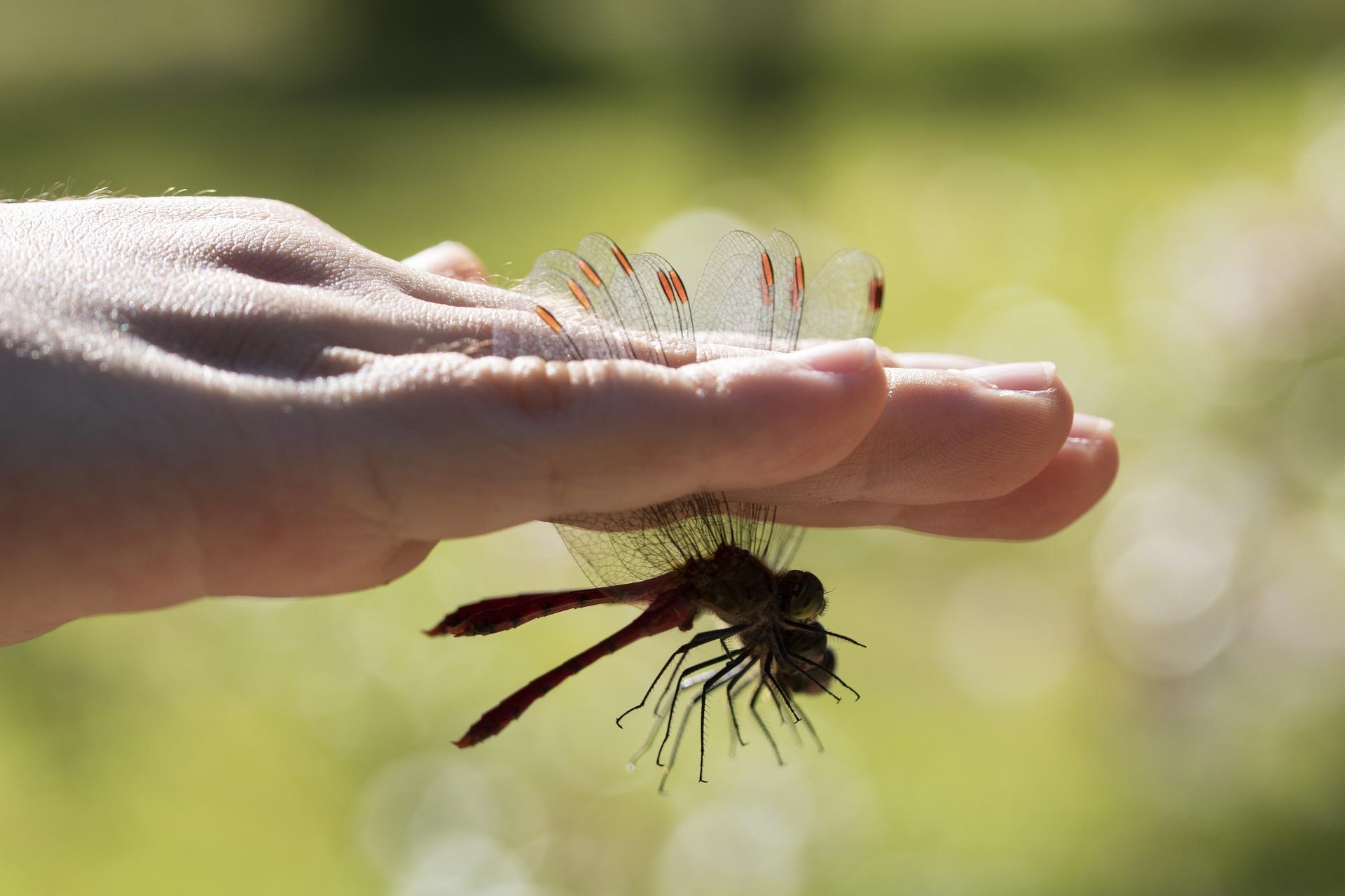 le vite dei bambini libellula