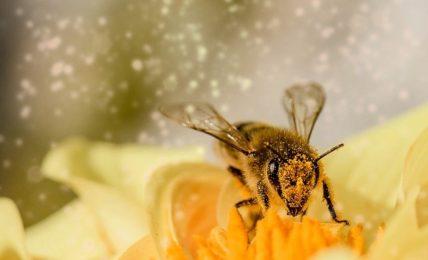 insetti_impollinatori